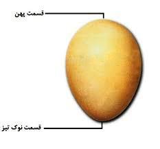 آموزش روش نطفه سنجی و خرید تخم نطفه دار